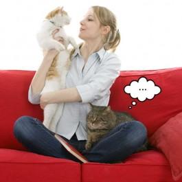 고양이가 주눅 드는 순간 4