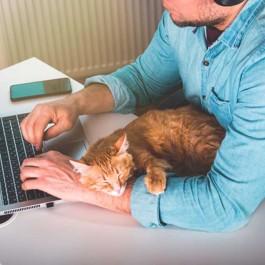 노트북 켜고 열일 중인 집사를 방해하는 고양이 유형 8