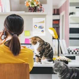고양이가 집사를 부를 때 하는 행동 5