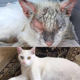 극적으로 살아난 길고양이의 놀라운 반전 미모