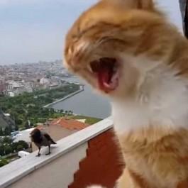 까마귀가 자꾸 말 걸어서 성질난 고양이