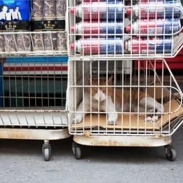 고양이는 안 팔아요 - 야옹  ②