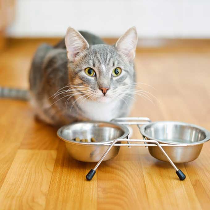 고양이 건강을 좌우하는 식기 체크 포인트 5