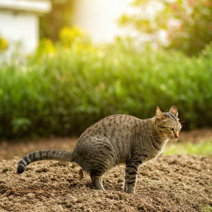 고양이화장실, 사막화 방지보다 중요한 건 '이것'