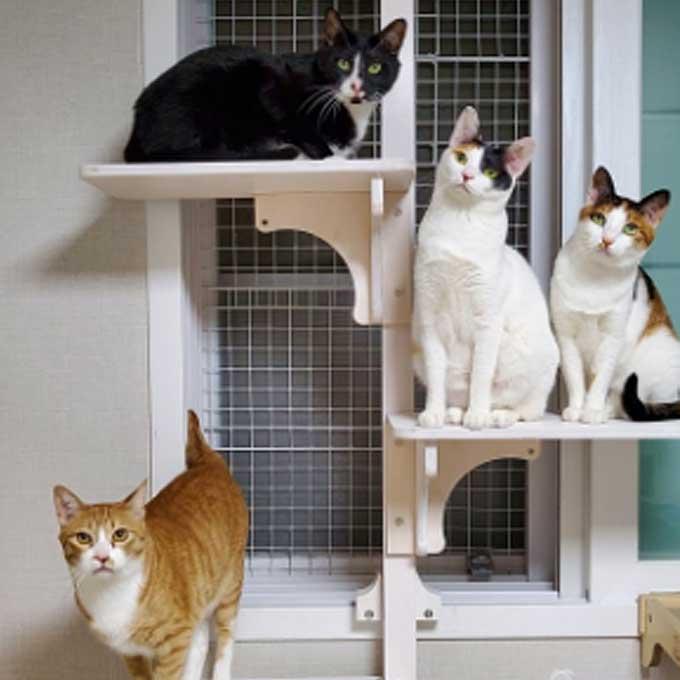 '단점, 고양이가 안 내려옴' 창문에 다는 윈도캣 캣폴