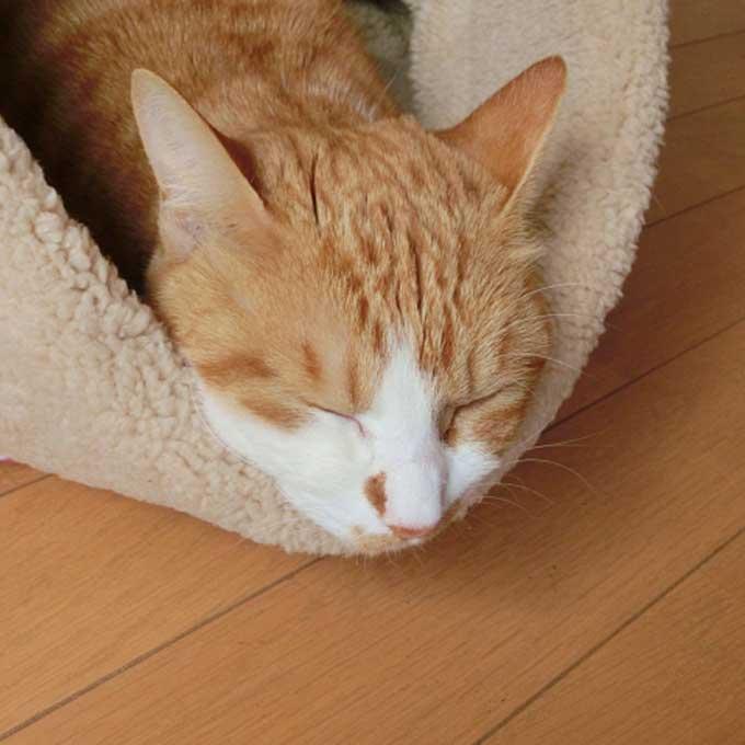 겨울철, 냥님들이 좋아하는 '고양이 집' 특징 4