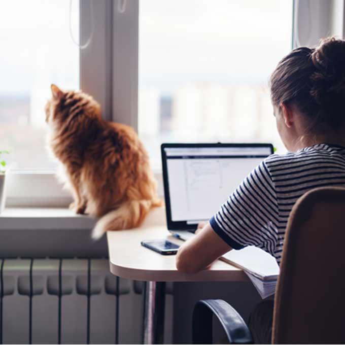 고양이가 안정감을 느끼는 집 특징 9