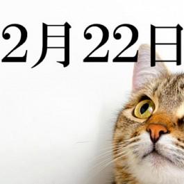 2월, 일본은 고양들의 천국