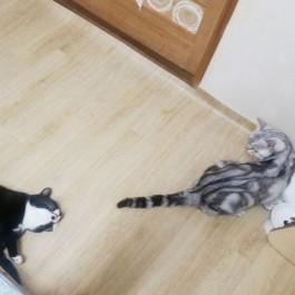 고양이가 고양이를 사랑할 때