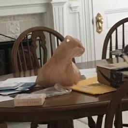고양이로 밖에 보이지 않는 신기한 사진 모음