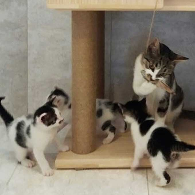 """입양 - """"이 행복, 계속될 수 있겠죠?"""" 빌라 계단 밑 여섯 고양이 가족"""
