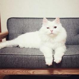 입양 - 자재더미 위에서 사람만 바라보던 고양이 미옥