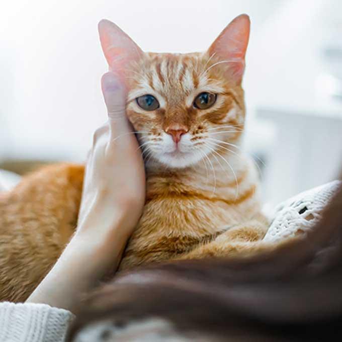 고양이가 집사한테 마음 주는 과정 4