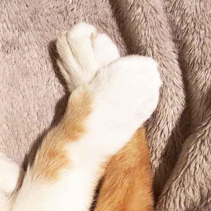 Q. 고양이가 앞발을 'X'자로 꼬고 있는 이유 3