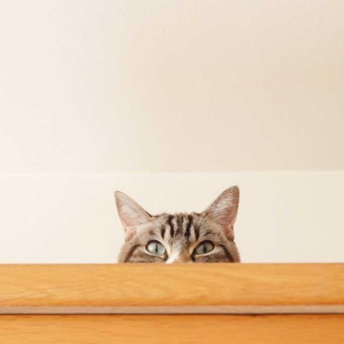 응석(애교)를 부리고 싶은데 방법을 모르는 고양이 유형 3
