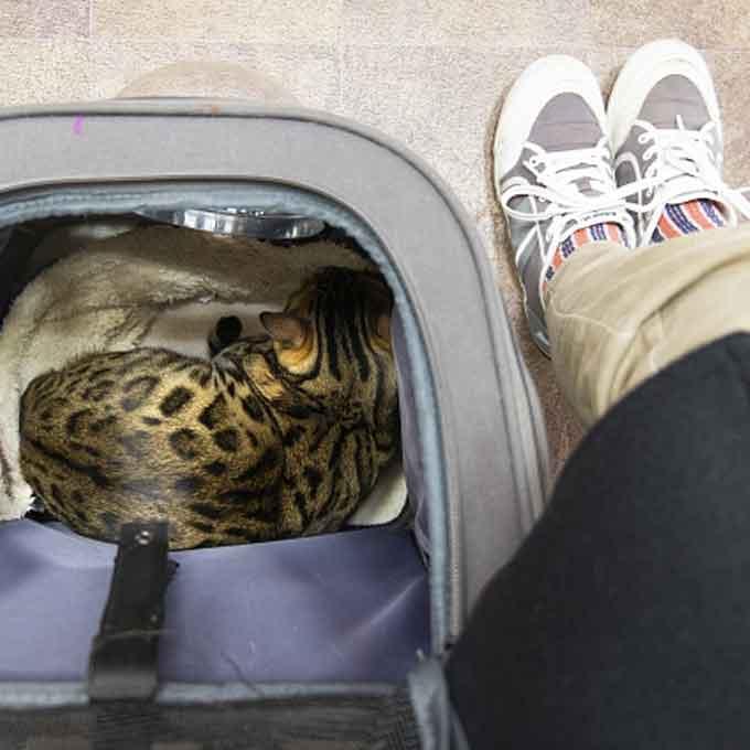 그런데 고양이가 병원 가는 건 어떻게 알았을까