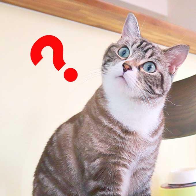 그토록 사랑했던 집사, 고양이는 '이때' 잊는다