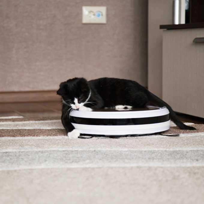 Q. 고양이가 로봇청소기를 타고 다니는 이유 5