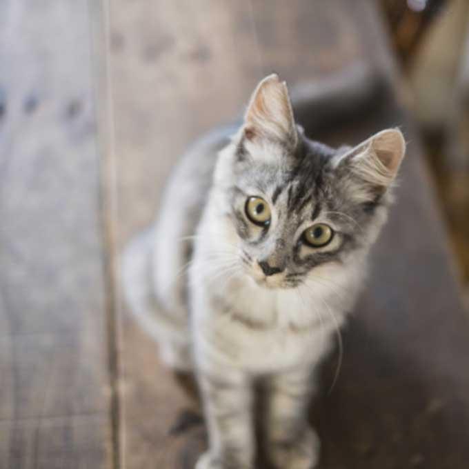 고양이가 눈을 치켜뜨고 집사를 바라볼 때 마음 3