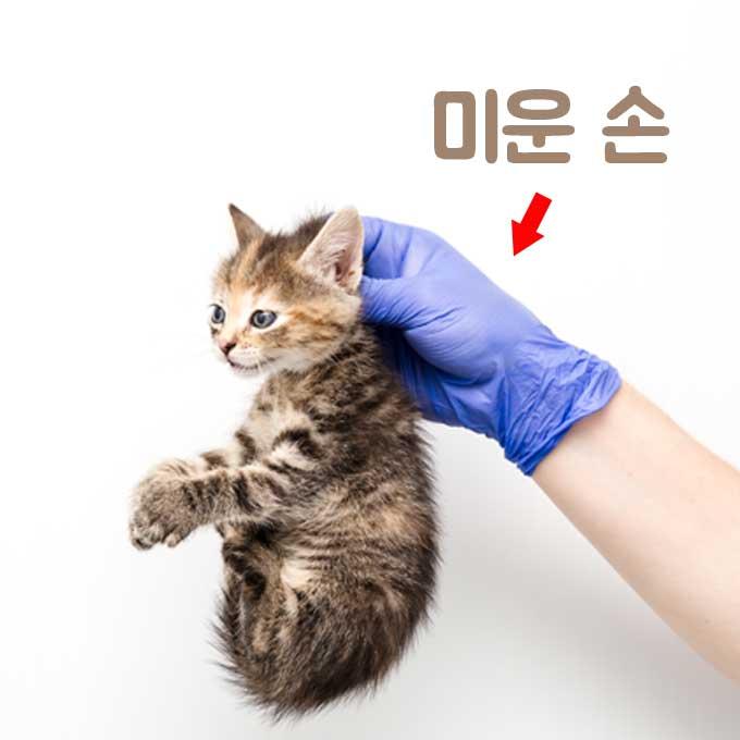 Q. 고양이 목덜미 잡고 들어올리면 절대 안 되는 이유
