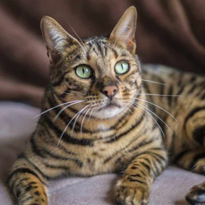 고양이가 골똘히 생각하고 있을 때 하는 행동 4