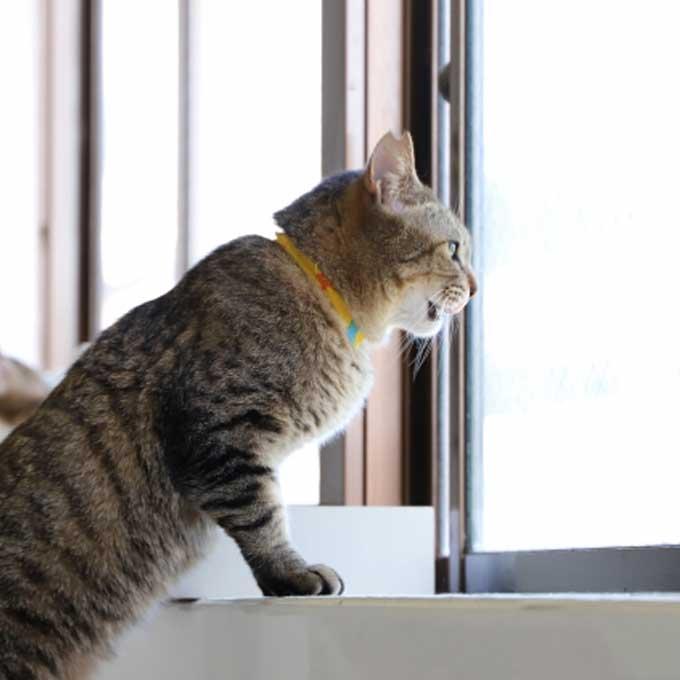 Q. 고양이가 창가에서 특히 더 흥미롭게 보는 것 4
