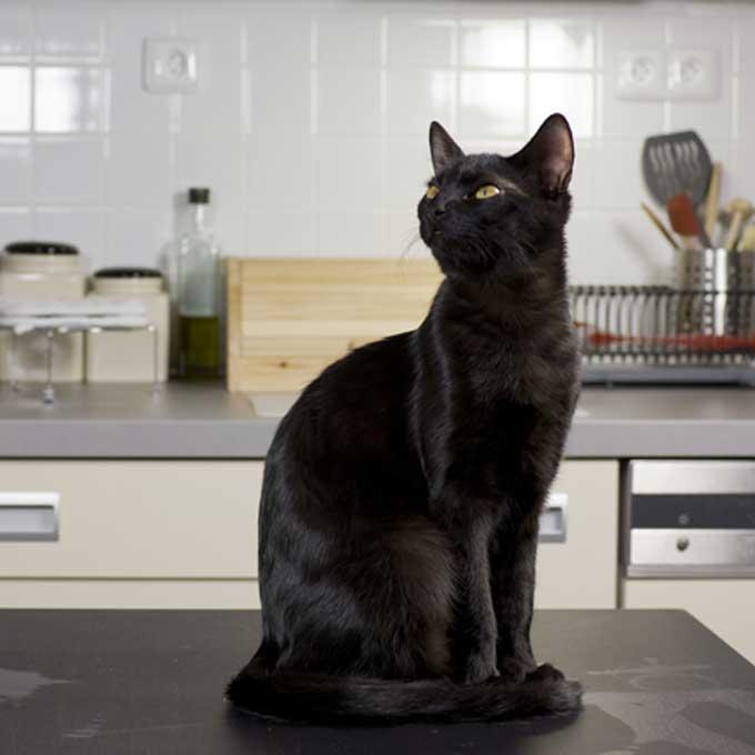 Q. 고양이가 주방 싱크대에 잘 올라가는 이유