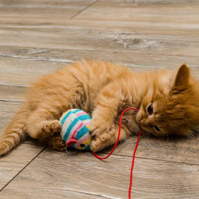 Q. 고양이가 눈에 쌍심지를 켜고 뒷발차기를 할 때 기분 3