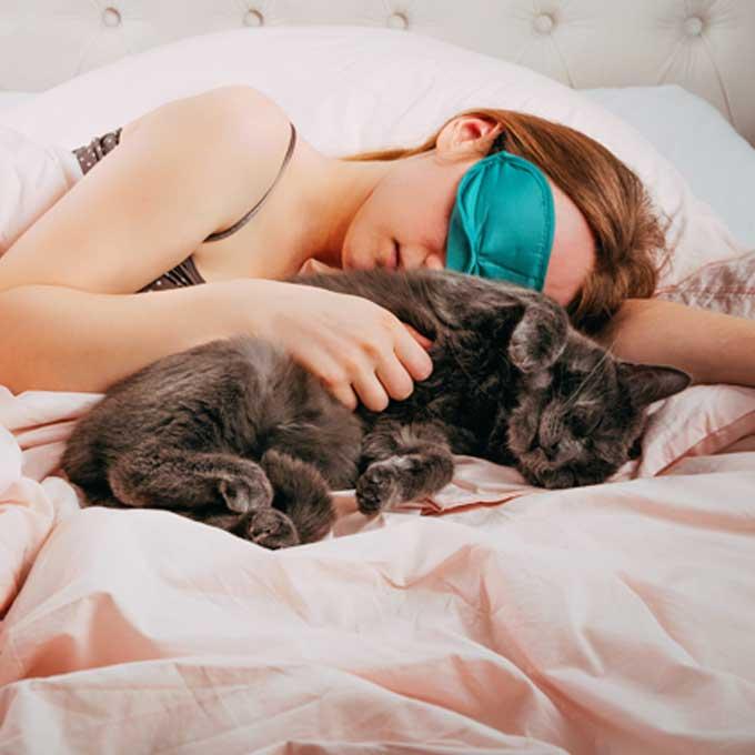 집사와 함께 자야겠다는, 고양이의 결심에 영향을 주는 요인 4