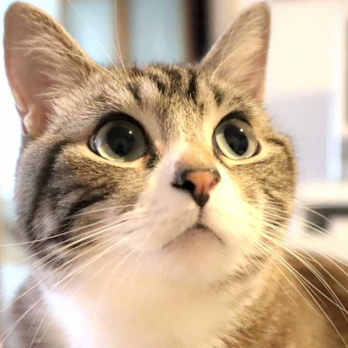 기분에 따라 눈 모양이 바뀐다, 눈으로 알아보는 고양이 마음 4