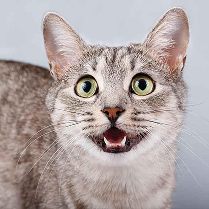 Q. 고양이는 어떻게 자신의 이름을 기억할까