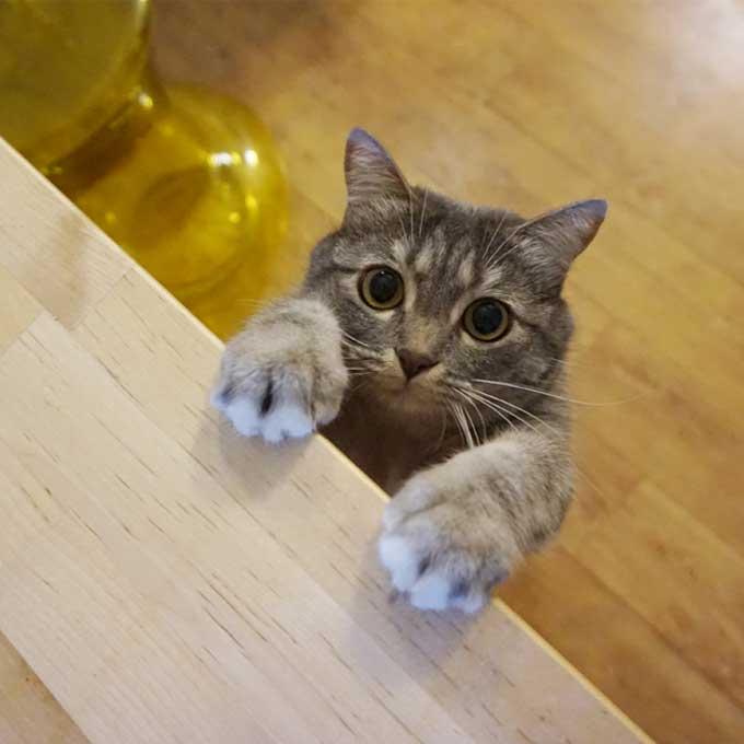 Q. 놓치지 말자, 고양이가 은근히 사랑을 전하는 방법 5