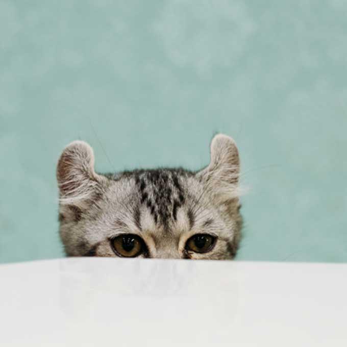 고양이가 몸을 반쯤 숨기고 집사를 유심히 지켜보고 있을 때 기분