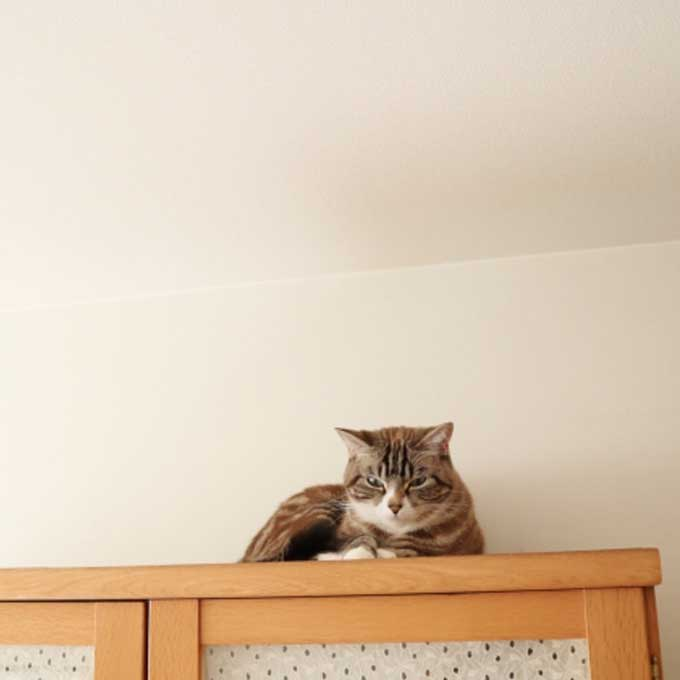Q. 고양이가 집사를 높은 곳에서 바라보고 있을 때 마음 3