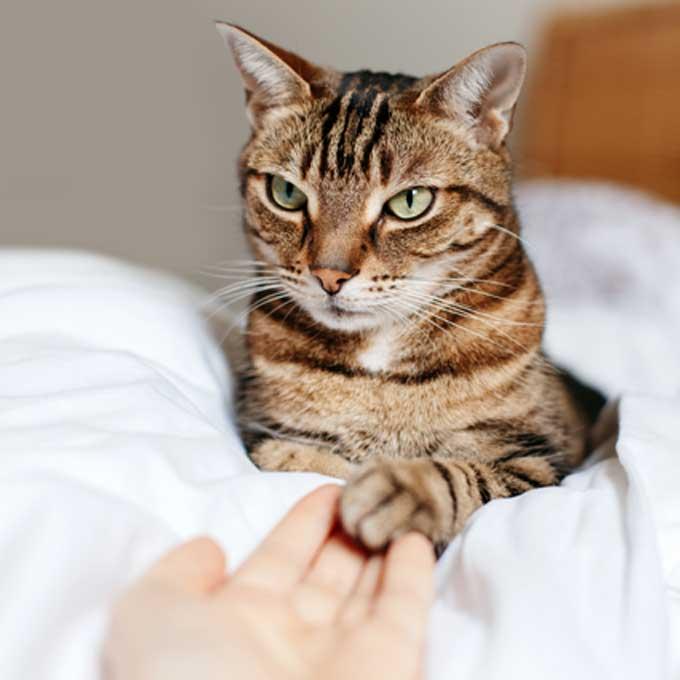 """""""젤리 만져봐도 됨"""", 울 고양이가 추워하는지 쉽게 아는 방법 4"""