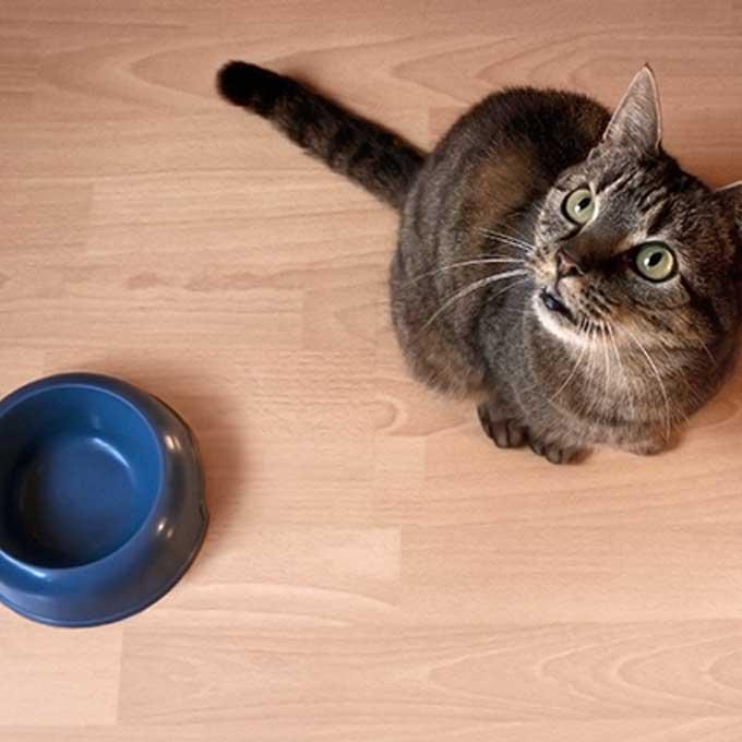 Q. 고양이가 집사에게 밥 달라고 조를 때 하는 행동 7