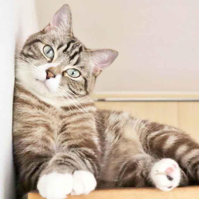 고양이와 집사가 눈이 자주 마주치는 이유 5