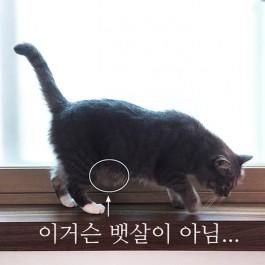 Q. 고양이 뱃살은 왜 이렇게 늘어지는걸까?