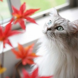 고양이의 가을맞이법 5, 이때 집사가 도와줘야 할 것은?