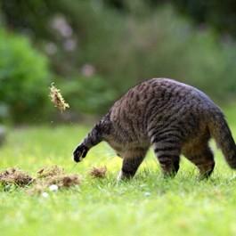 모래도 없는데, 고양이가 덮는 행동을 하는 이유 6