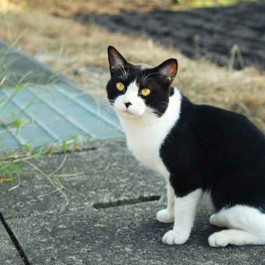 Q. 이사하면 원래 살던 집으로 고양이가 되돌아갔던 이유?