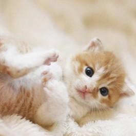 고양이가 기분 좋을 때 하는 행동 3, 엄마냥이 돌봐줄 때처럼