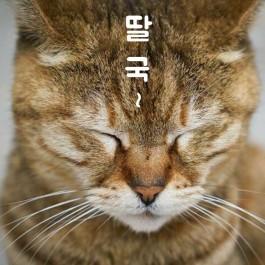 """""""먹는 거 좋아하는 냥은 이것도 잘한다"""", 고양이가 딸꾹질하는 상황 4"""