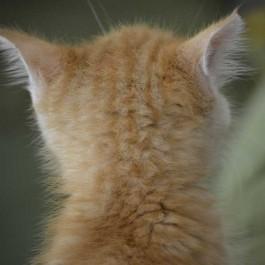쫑끗 쫑끗, 고양이가 귀를 의도적으로 움직일 때 기분 4