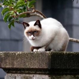 """""""더워서 났다공?"""" 고양이가 흰머리가 나는  매우 다양한 이유"""