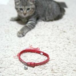 목걸이 해주면 고양이가 죽도록 싫어하는 이유 5
