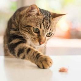 Q. 왜 고양이는 경계심이 강하면서 호기심도 많을까