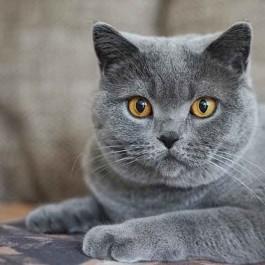 Q. 고양이가 집사를 뚫어지게 바라보는 이유