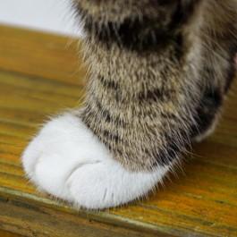 Q. 고양이 양말이 흰색뿐인 이유