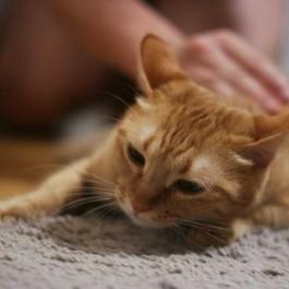 Q. 그런데 고양이는 어떻게 자신의 임종을 예감했을까
